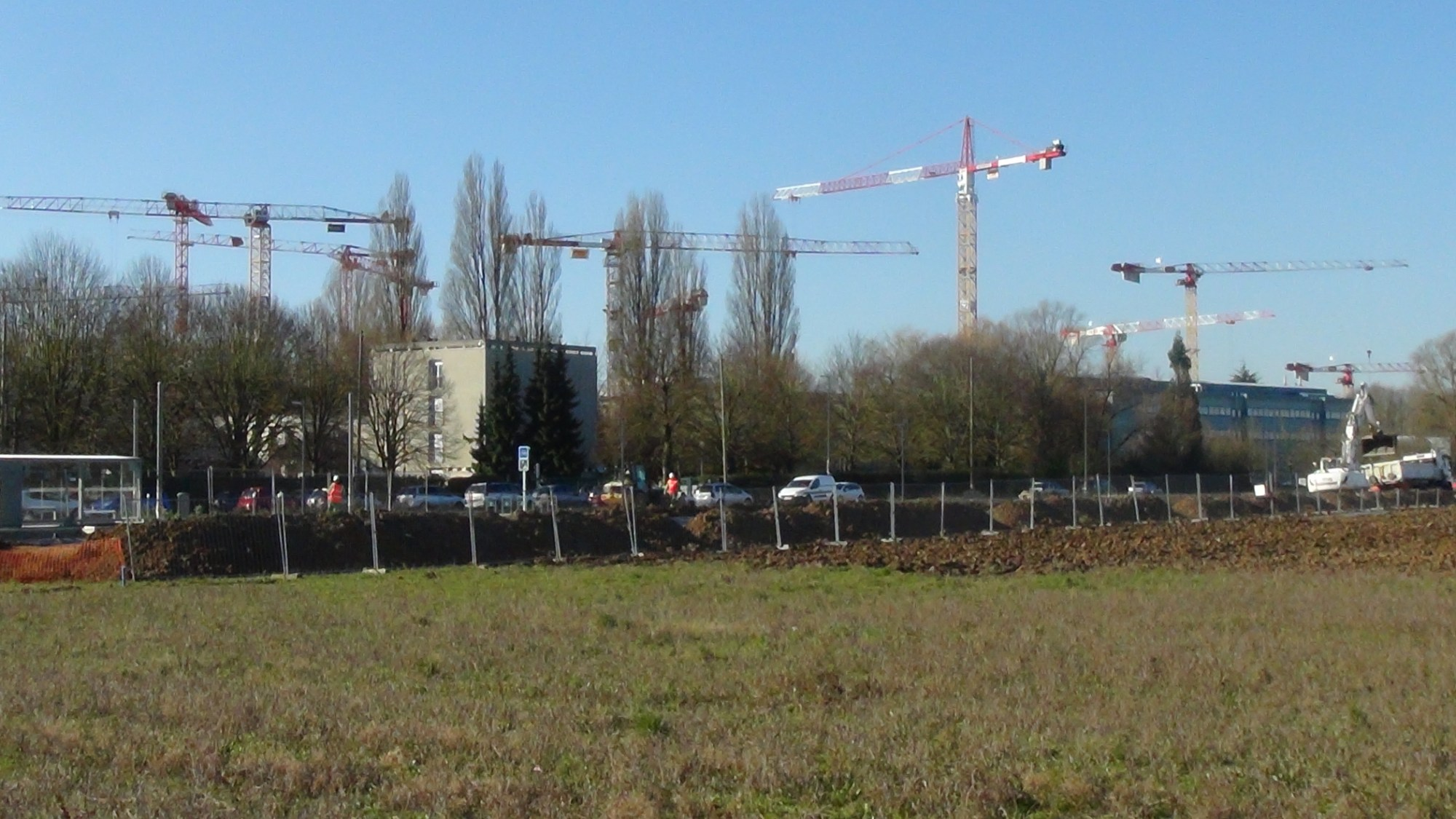 grues moulon
